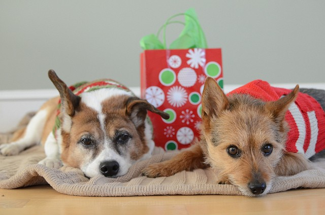 Bring a little holiday cheer to the dogs and cats of ARF!