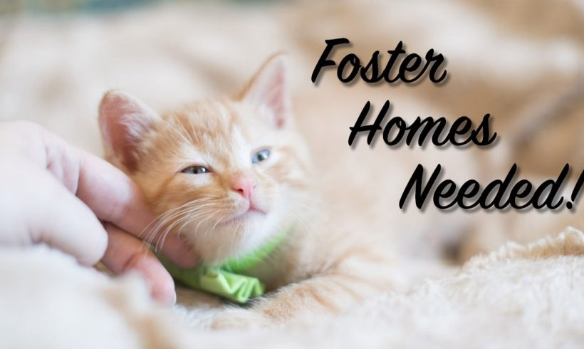 Foster homes needed