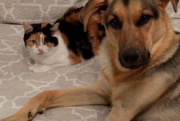 Hutch and Roxy